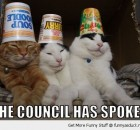 funny-council-spoken-cats-cups-buckets-mad-crazy-heads-pics